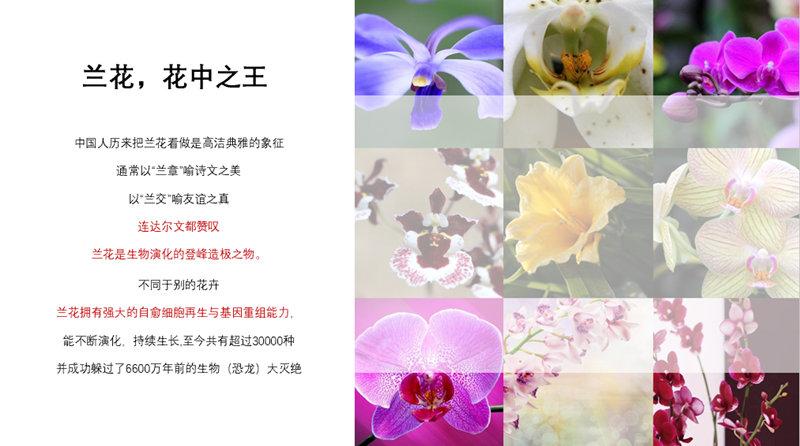 TST兰花系列